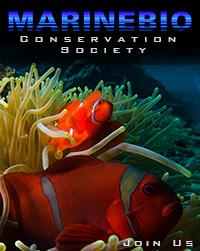 Support the MarineBio Conservation Society