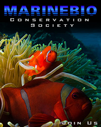 Join the MarineBio Conservation Society