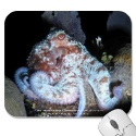 Reef Octopus mousepad