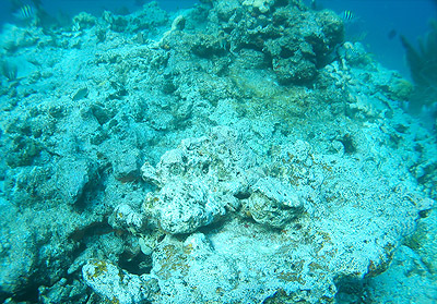 dead coral in the Florida Keys