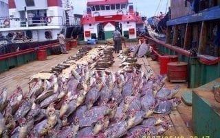 397 Dead Sea Turtles Seized
