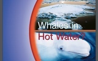 Whales in hot water?