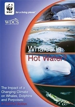 Whales in hot water