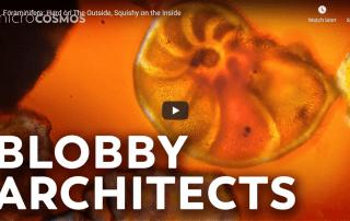 Foraminifera video