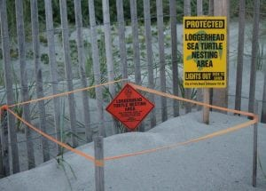Help readers to recognise turtle nesting areas