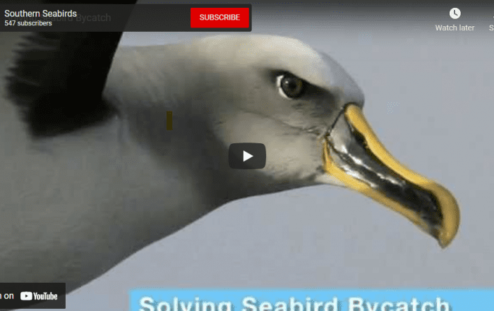 seabirds at risk