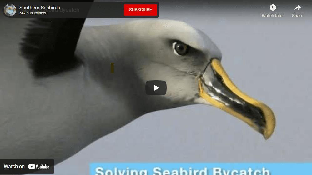 seabirds at risk